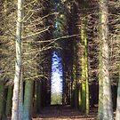 The Dense Wood by Tom Gomez
