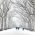 Central Park by Tony Yu