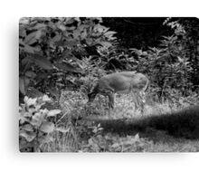 Wildlife - B&W Canvas Print