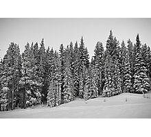 Vail Mountain Forest Study 2 Photographic Print
