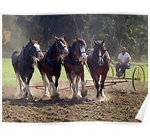 Clydesdales Churning Up The Dust  Poster