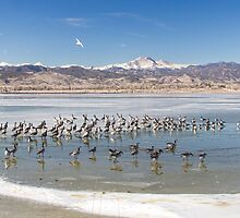 Geese On Ice  by Bo Insogna