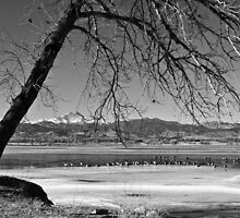 Longs Peak Geese BW by Bo Insogna