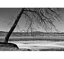 Longs Peak Geese BW Photographic Print