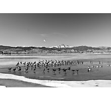 Geese On Ice BW Photographic Print
