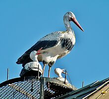 Storks on the Roof by Martha Sherman