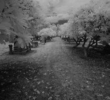 path of the dead by Matthew Larsen