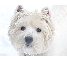 Born to  love snow Photographic Print
