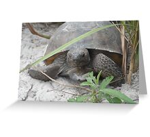 Turtle on the Beach Greeting Card
