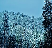 Winter Lace...McCall, Idaho by trueblvr