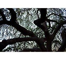 Tree Located in Alamo Gardens Photographic Print