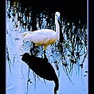 Egret by Warren. A. Williams