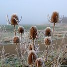 Frosty teasel by KatDoodling