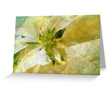 Pale Yellow Poinsettia 1 Sketchy Greeting Card