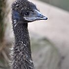 Baby Emu by Olivelle