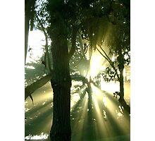 Treeshine Photographic Print