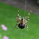 Itsy Bitsy Spider by ienemien