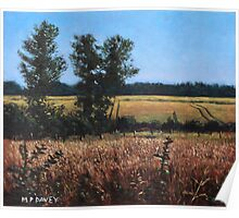 Dorset Countryside Golden Fields in Summer Poster
