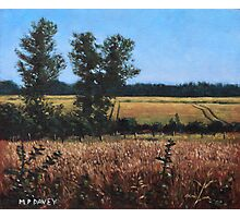 Dorset Countryside Golden Fields in Summer Photographic Print