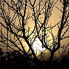 Misty Morning Sunrise by KatDoodling