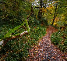 Roslin glen again by Graeme  Ross
