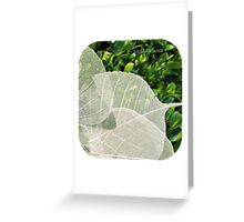 Transparence Greeting Card