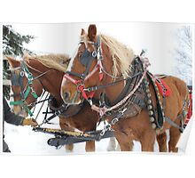 Horse Drawn Sleigh Ride Poster