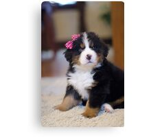 Birdie the Bernese Puppy Canvas Print