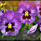 Pansies by Bloomin' Arty