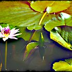 Water Lily by Bloomin' Arty