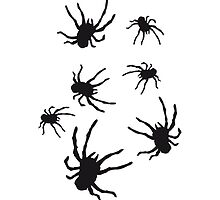 Tarantula Spider Pattern by Style-O-Mat
