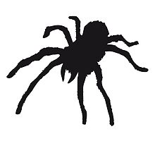 Tarantula Spider by Style-O-Mat