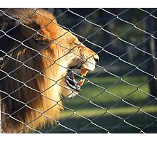 Caged Beast Photographic Print
