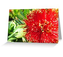 Red flower. Greeting Card