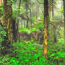 RainForrest Dreaming #2 - Mount Wilson NSW - The HDR Experience by Philip Johnson