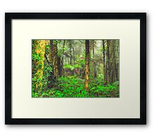 RainForrest Dreaming #2 - Mount Wilson NSW - The HDR Experience Framed Print