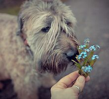 Forget Me Not  by Boston Thek Imagery