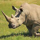 Rhino by Chris Kean