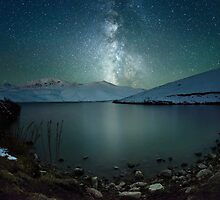 Starry tree by Elmar Akhmetov