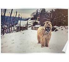 Wheatens+Snow=Happiness  Poster
