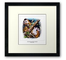 RED-BACKED SQUIRREL MONKEY Framed Print