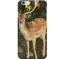 Fallow Deer iPhone Case/Skin