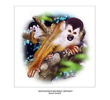 RED-BACKED SQUIRREL MONKEY 2 Photographic Print