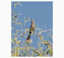 Female Phainopepla Eyeing the Morning from Her Tree One Piece - Short Sleeve