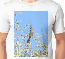 Female Phainopepla Eyeing the Morning from Her Tree Unisex T-Shirt