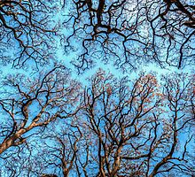 Reaching the Sky by Neil Cameron