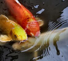 Three Koi in a fountain...actually a pond! by Keala