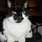 Tuxedo Cat by Margaret S Sweeny