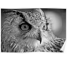 Bengal Owl black and White Poster