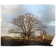 Leafless oak Poster